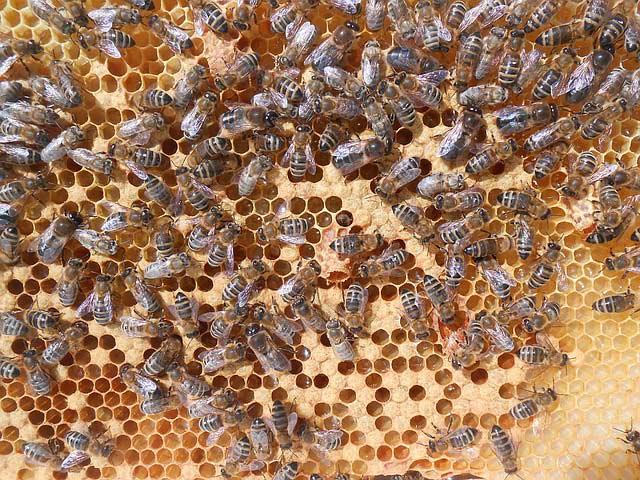 Jak se řeší problém s agresivitou včel